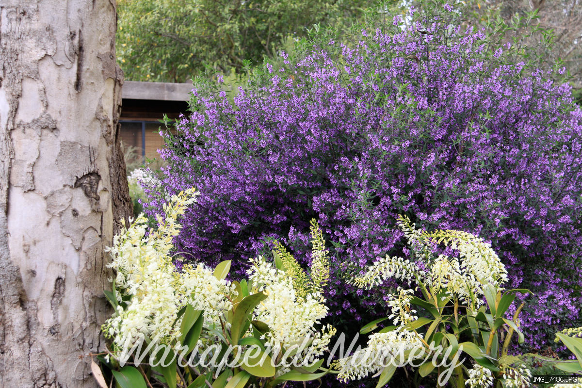 Plants For Clay Soils Native Plant And Revegetation Specialists
