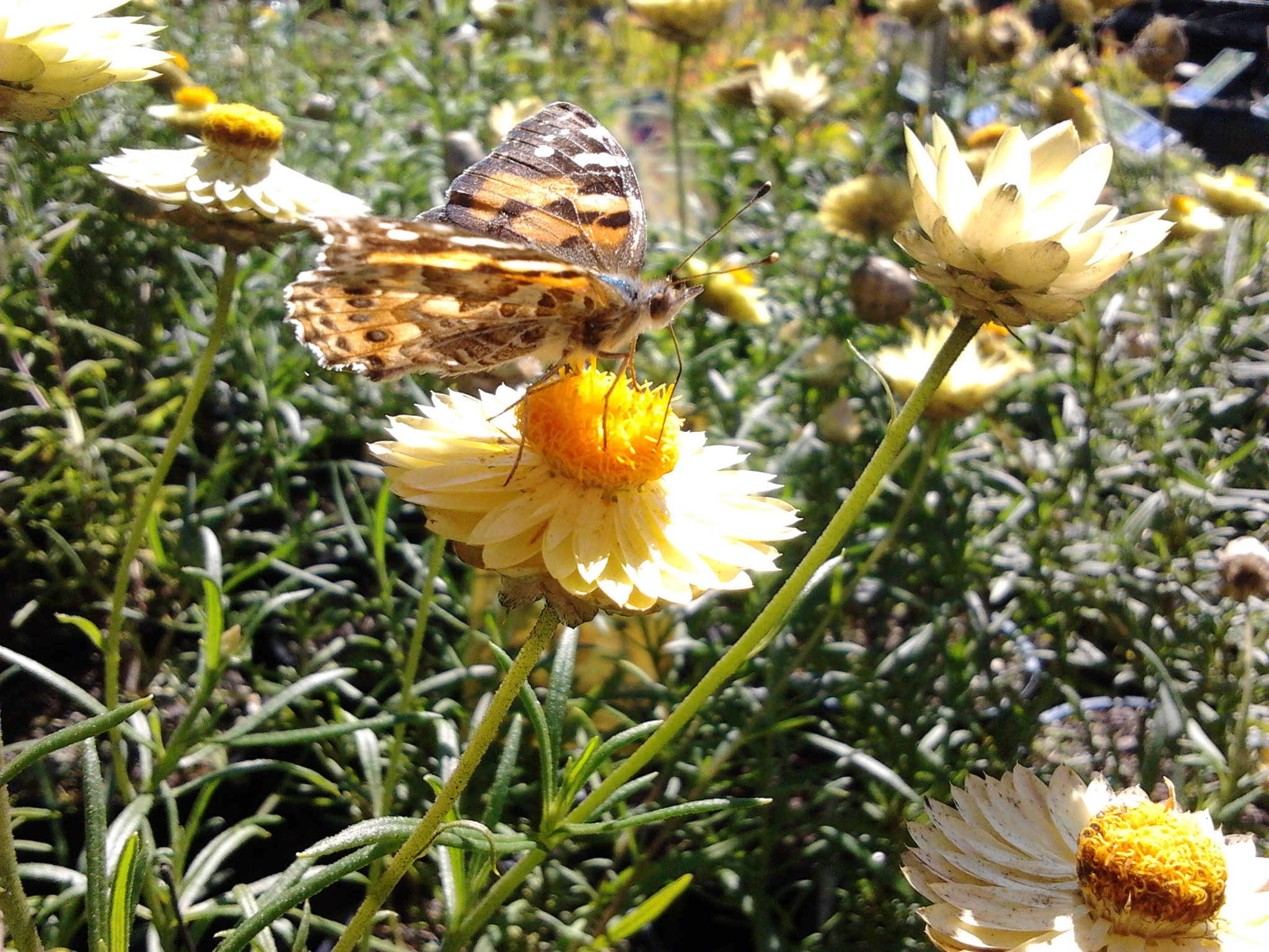 Attracting Butterflies to your Garden | Native Plant and ...