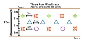 Three Row Windbreak specification