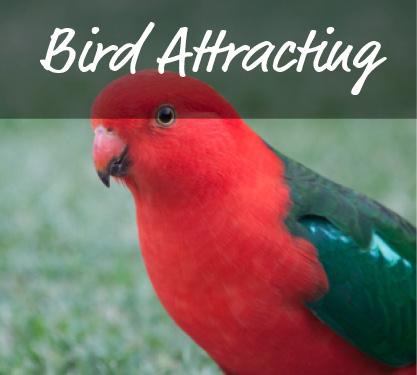 Attracting Birds