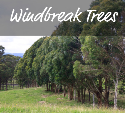 Windbreak Plants