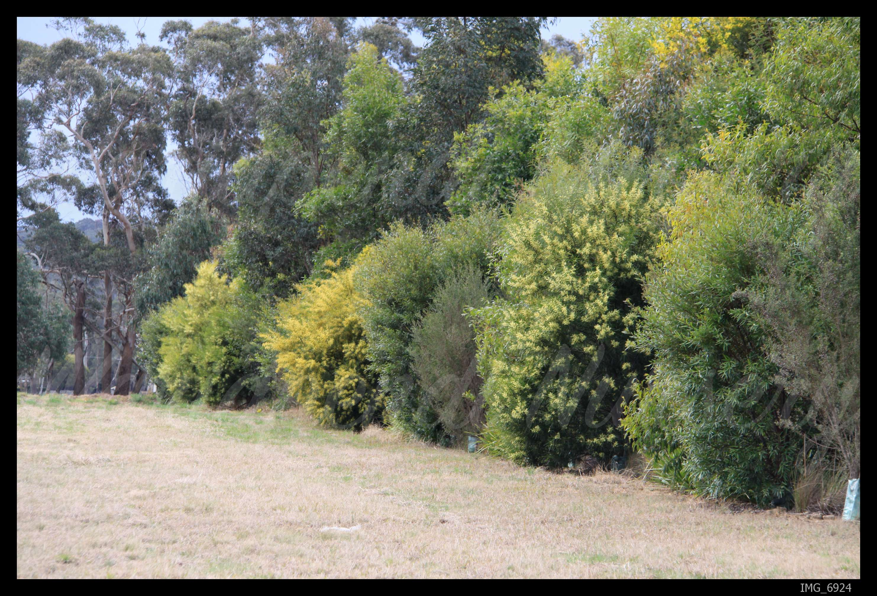 Creating Sustainable Windbreaks Native Plant And