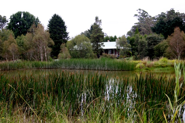 Creating A Wetland Native Plant And Revegetation Specialists