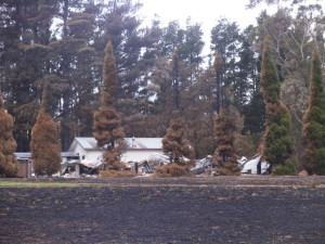 Don't make the mistake of planting highly flammable conifers near your home!